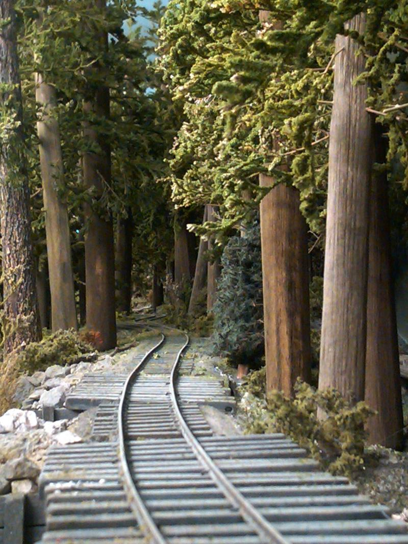 Trains will snake through the woods